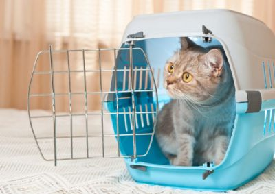 Comment choisir la cage de transport de son chat ?