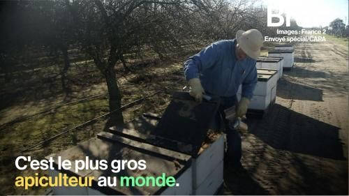 VIDEO. Les abeilles californiennes, grandes victimes de la production d'amandes