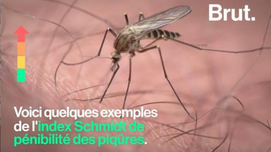 VIDEO. Les piqûres d'insectes, de l'indolore à l'intolérable