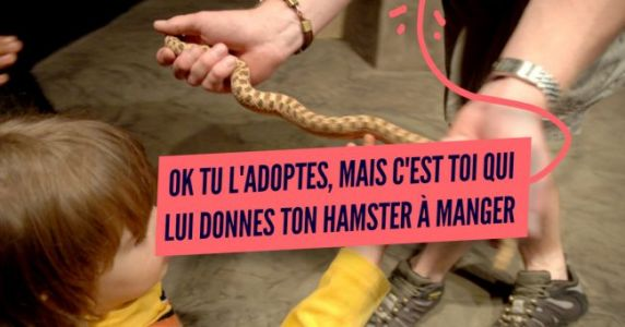 Top 10 des fausses excuses à donner à ton gosse qui veut adopter un serpent