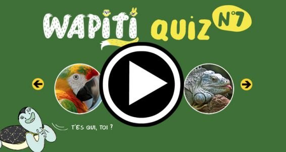 Grand Quiz Nature Wapiti N°7