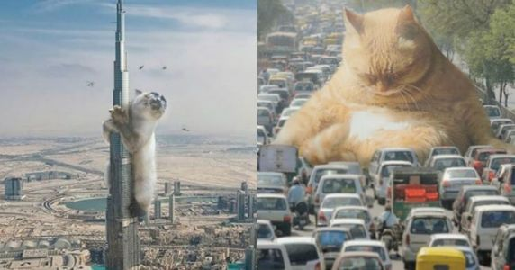 Top 15 des photos de chats géants qui envahissent la ville