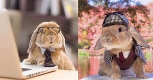 Top 14 des photos de PuiPui, le lapin le plus stylé d'Instagram