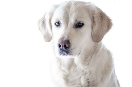 Quand euthanasier son chien?