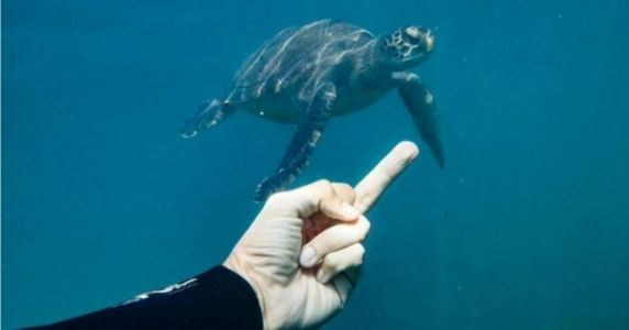 Top 10 des meilleures photos du compte Insta Flipping off Fish, l'homme qui insultait l'univers marin
