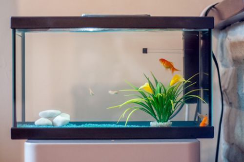 Comment installer son aquarium d'eau douce ?