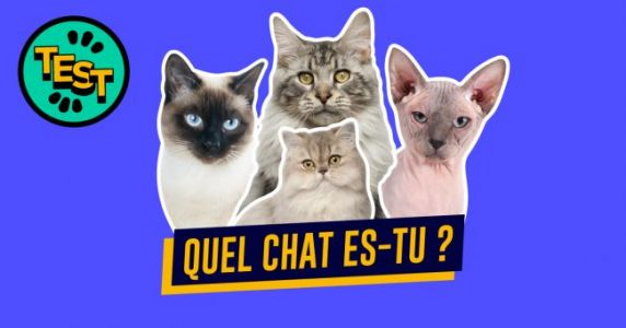 Quelle race de chat es-tu ?
