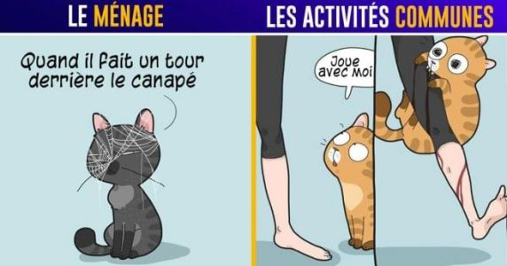 Top 15 des illustrations de Lingvistov sur la vie en coloc avec un chat