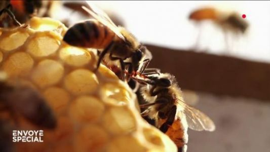 VIDEO. Un monde sans abeilles