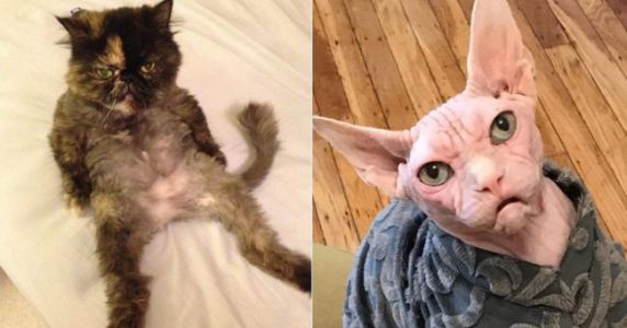 Top 10 des chats les plus moches d'Instagram, ceux qu'on n'a pas envie de caresser