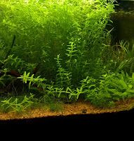 Aquarium naturel avec terreau