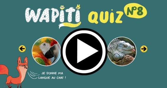 Grand Quiz Nature Wapiti N°8