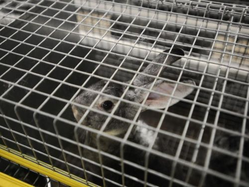 1 million de signatures contre l'élevage en cages