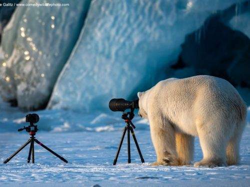 Voici les 10 photos les plus drôles des Comedy Wildlife Photography Awards