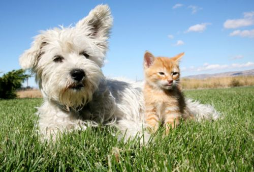 Comment vermifuger son chat/chien ?